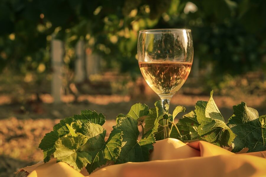 A beautifully displayed glass of pinot grigio wine draped in vines, in a vineyard!