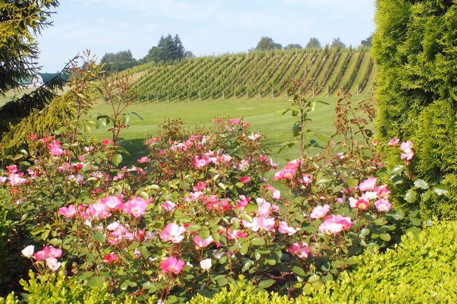 A gorgeous Canadian winery with amazing pink flowers! Here, some of the best Canadian wines are grown and produced!