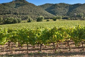 The Chilean Wine Industry