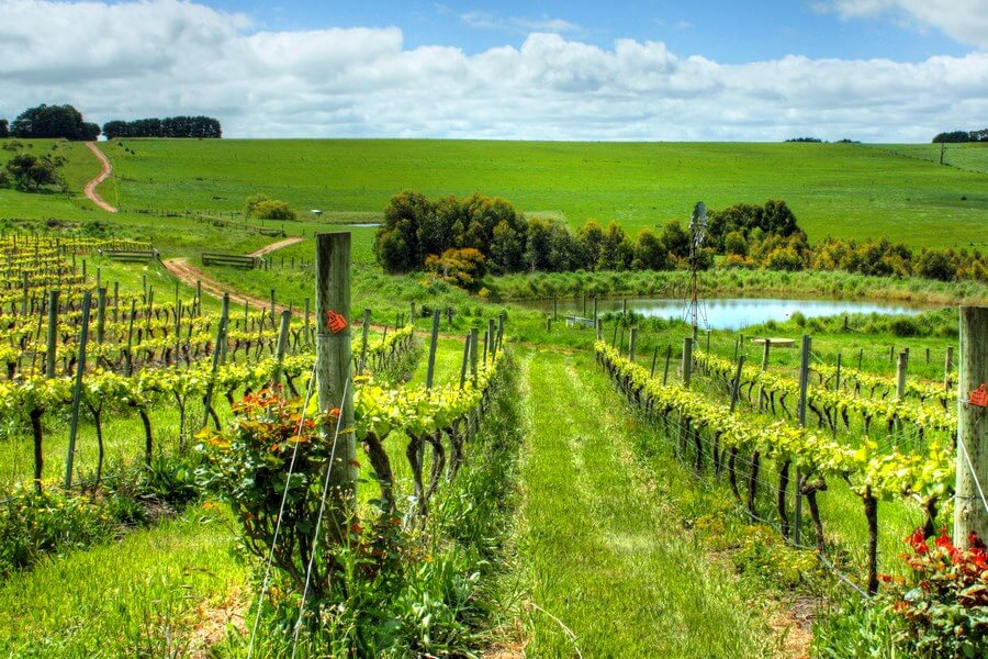 A stunning view of Quebec wineries, on a sunny, summer day.