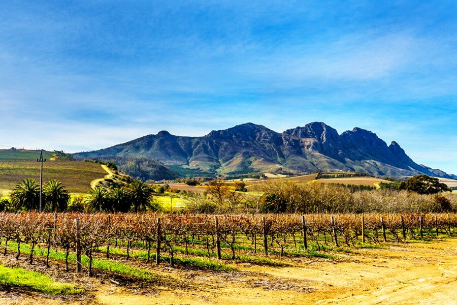 A beautiful example of Organic Wineries, with mountains in the background, overlooking the vineyard!