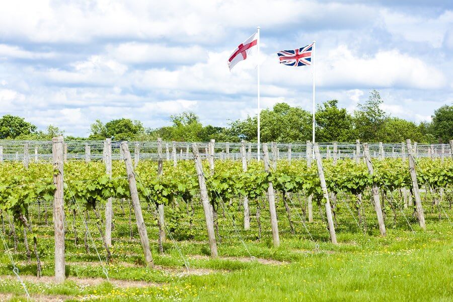 A beautiful scene of a united kingdom vineyard, displaying the absolute beauty of UK wineries!