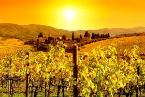 Napa California Wineries: One Day Road Trip