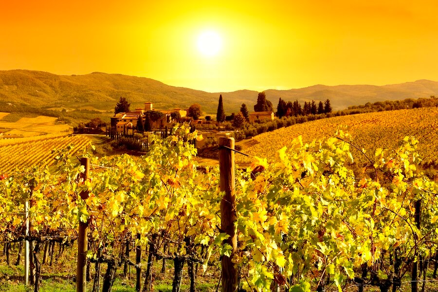 Napa California Wineries - A gorgeous view at a Nappa Valley Winery at sunset!