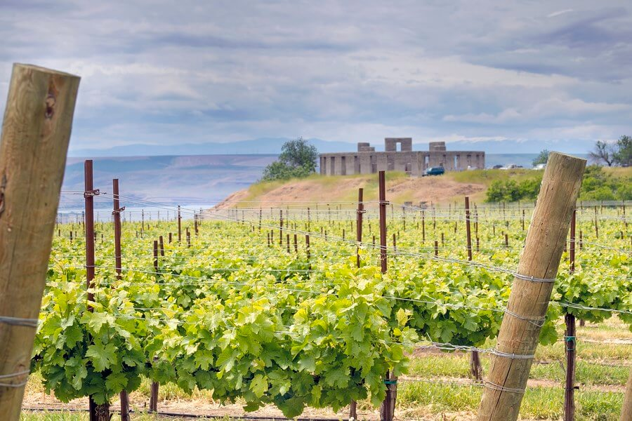 Washington State Wine- A gorgeous view of a winery in Washington State USA.