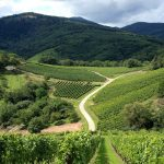 Alsace Wineries: One Day Road Trip