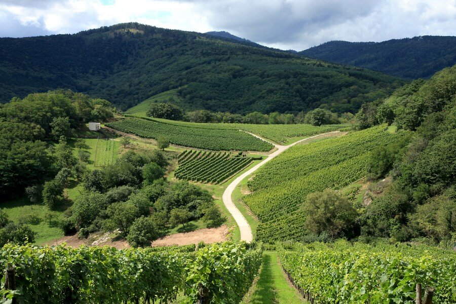 Alsace Wineries One Day Road Trip - DP