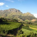 Argentinean Wineries: One Day Road Trip