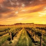 Australian Wineries: One Day Road Trip
