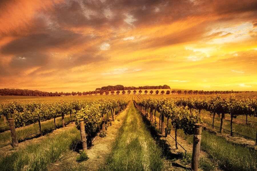 Australian Wineries One Day Road Trip - DP