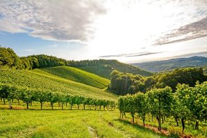Austrian Wineries: One Day Road Trip