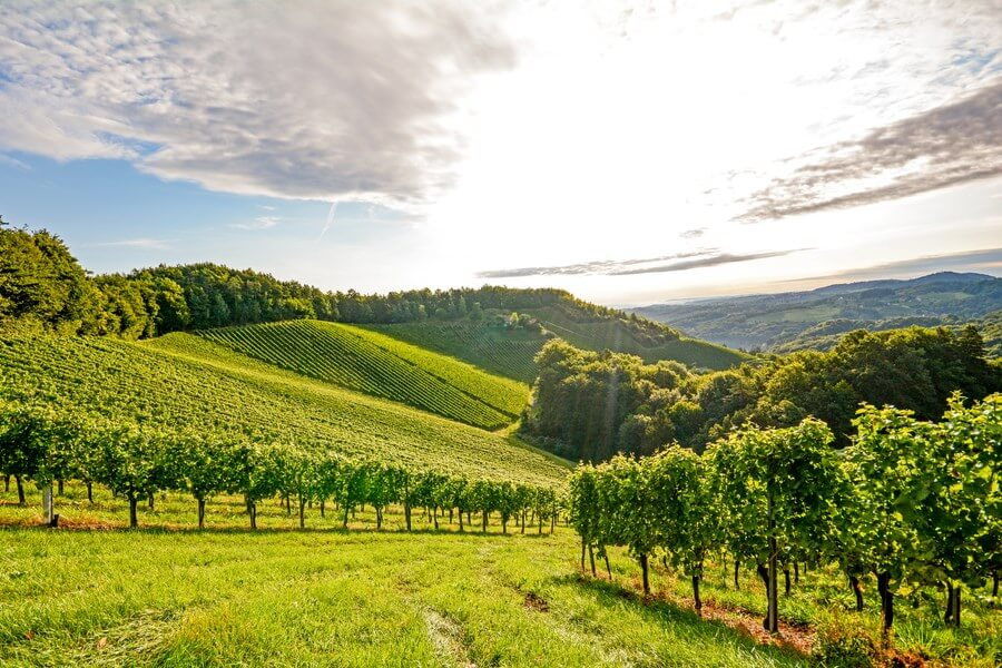 Austrian Wineries One Day Road Trip - DP