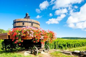 Burgundy Wineries: One Day Road Trip