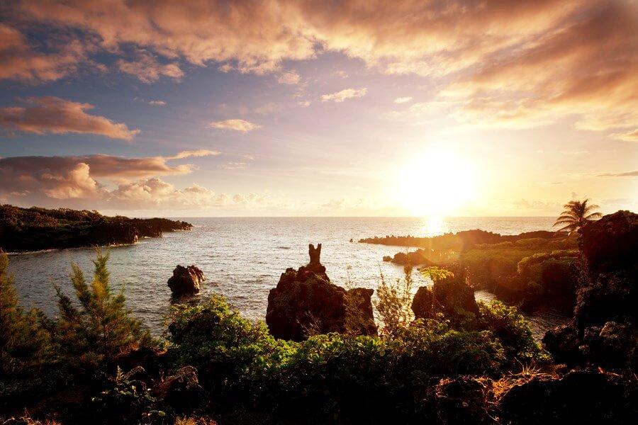 Hawaiian Wine Bars/Restaurants - DP