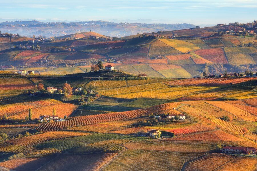 Italian Wineries Piedmont One Day Road Trip - DP