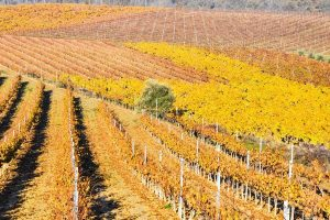 La Rioja Wine Tour: One Day Road Trip