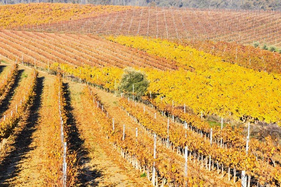 La Rioja Wine Tour One Day Road Trip - DP