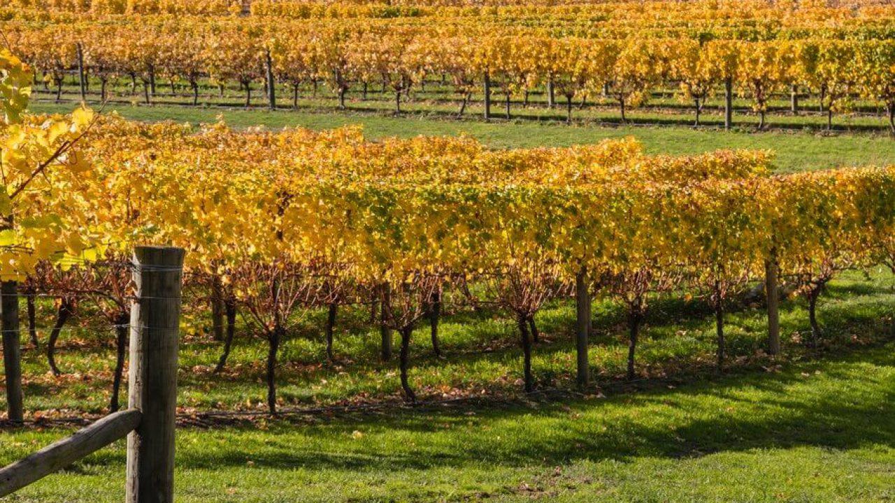 New Zealand Wineries: Marlborough Road Trip - SecondBottle Presents