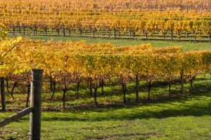New Zealand Wineries: Marlborough Road Trip