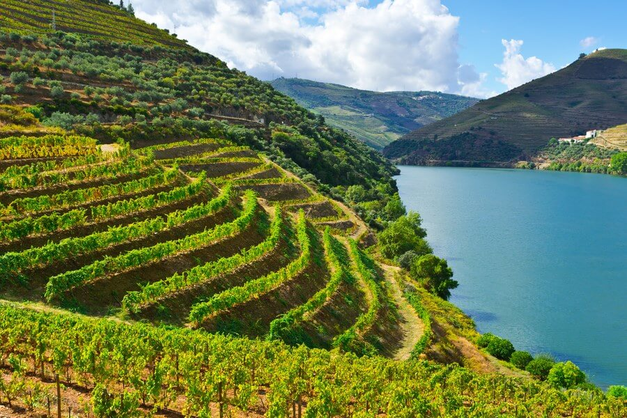 Portuguese Wineries One Day Road Trip - DP