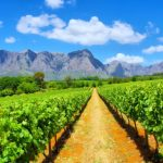 South African Wineries: One Day Road Trip