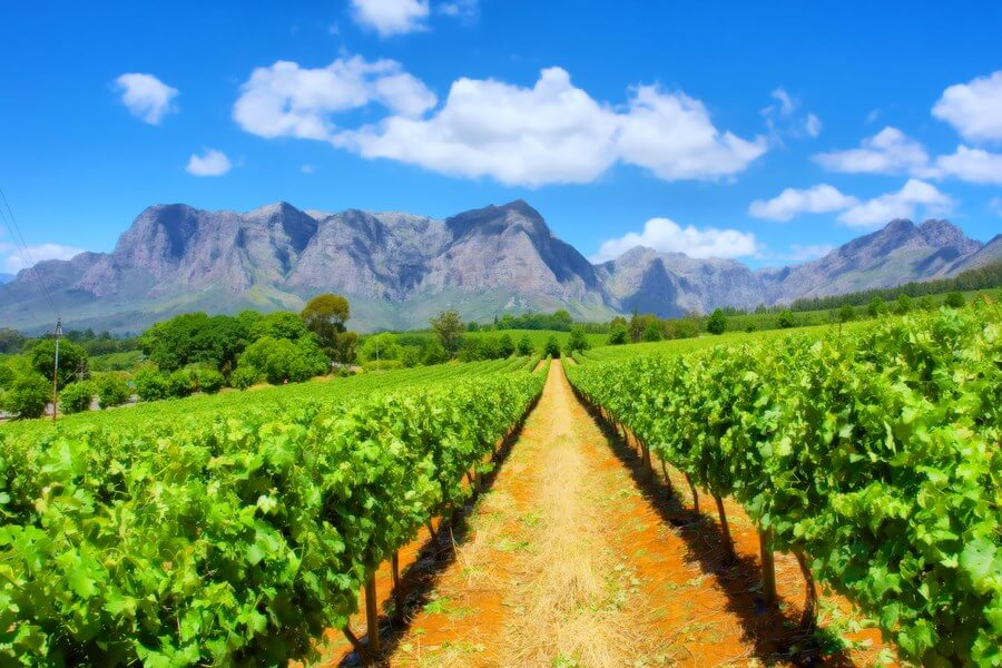 South African Wineries One Day Road Trip - DP