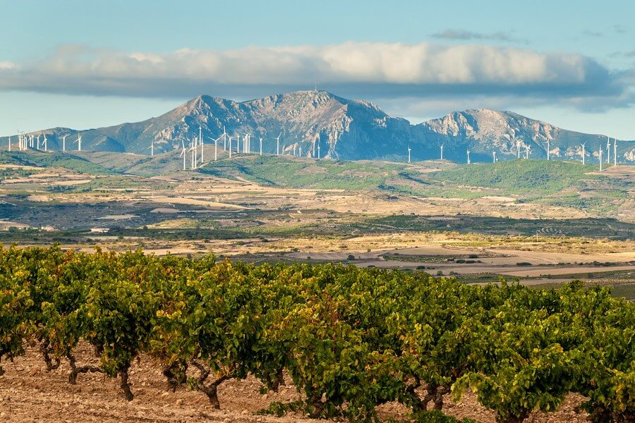 Spanish Wineries One Day Road Trip - DP