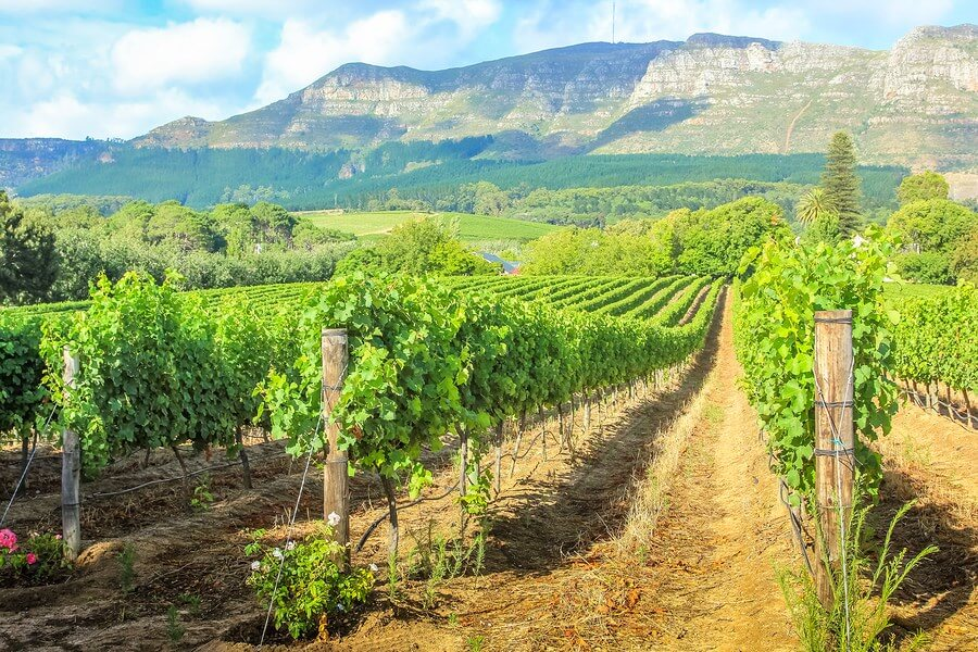 An amazing beautiful winery in Africa, similar to the scenes at other African wineries