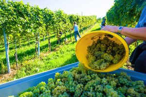 Wine Producing Countries: Top 3