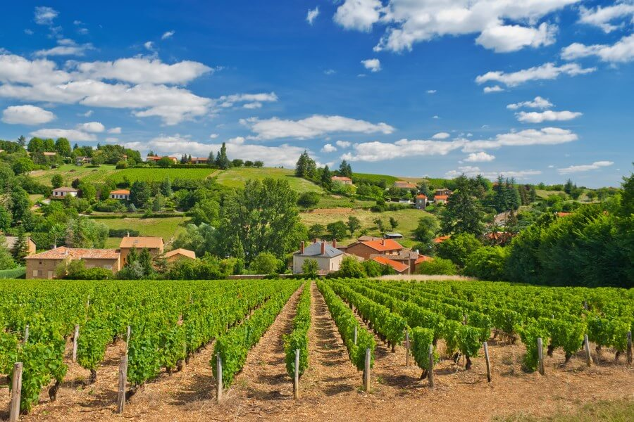 Amazing french vineyards on a beautiful summer day, white clouds and green grape vines