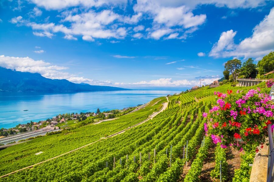Beautiful French vineyards on Sloping hills, overlooking amazingly clear blue water